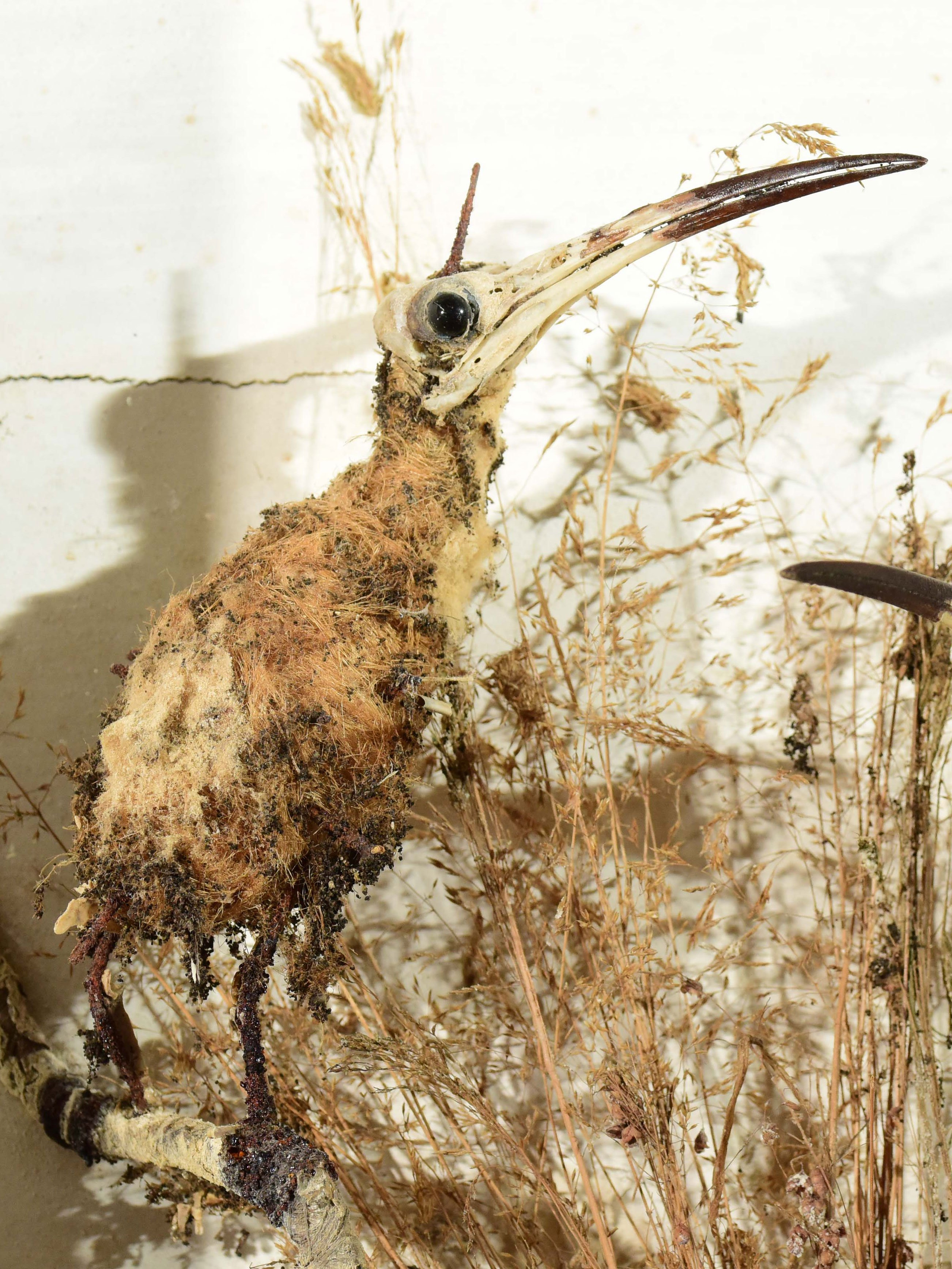 UNDERSTANDING CLOTHES MOTH INFESTATIONS | English Heritage