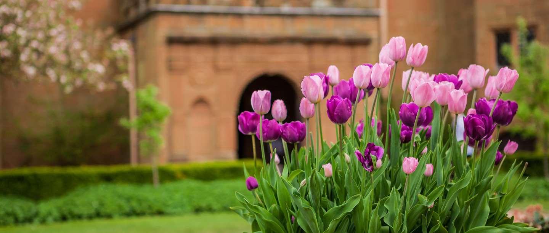 Image: flowers outside Kenilworth Castle