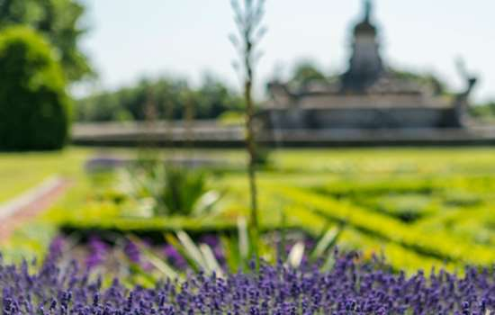 Image: Flowers at Witley Court and Gardens