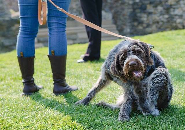 Dog Friendly Days Out | English Heritage