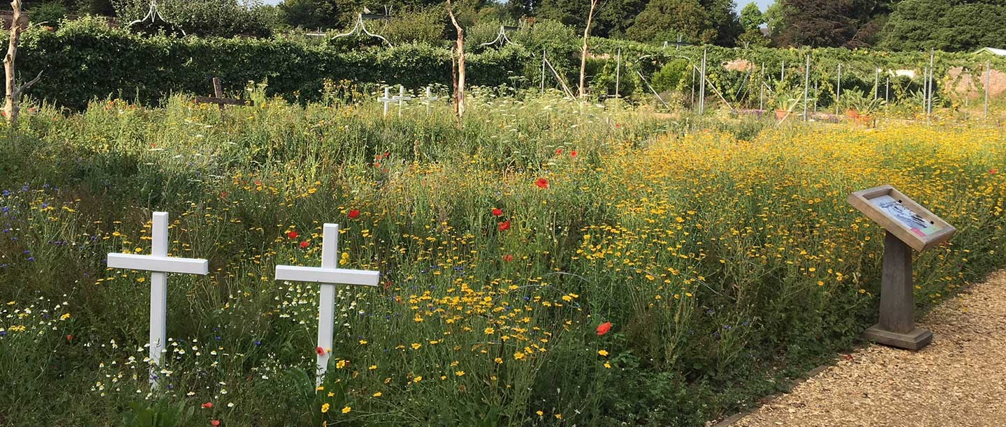An informally planted flowerbed including wildflowers and two white wooden crosses.