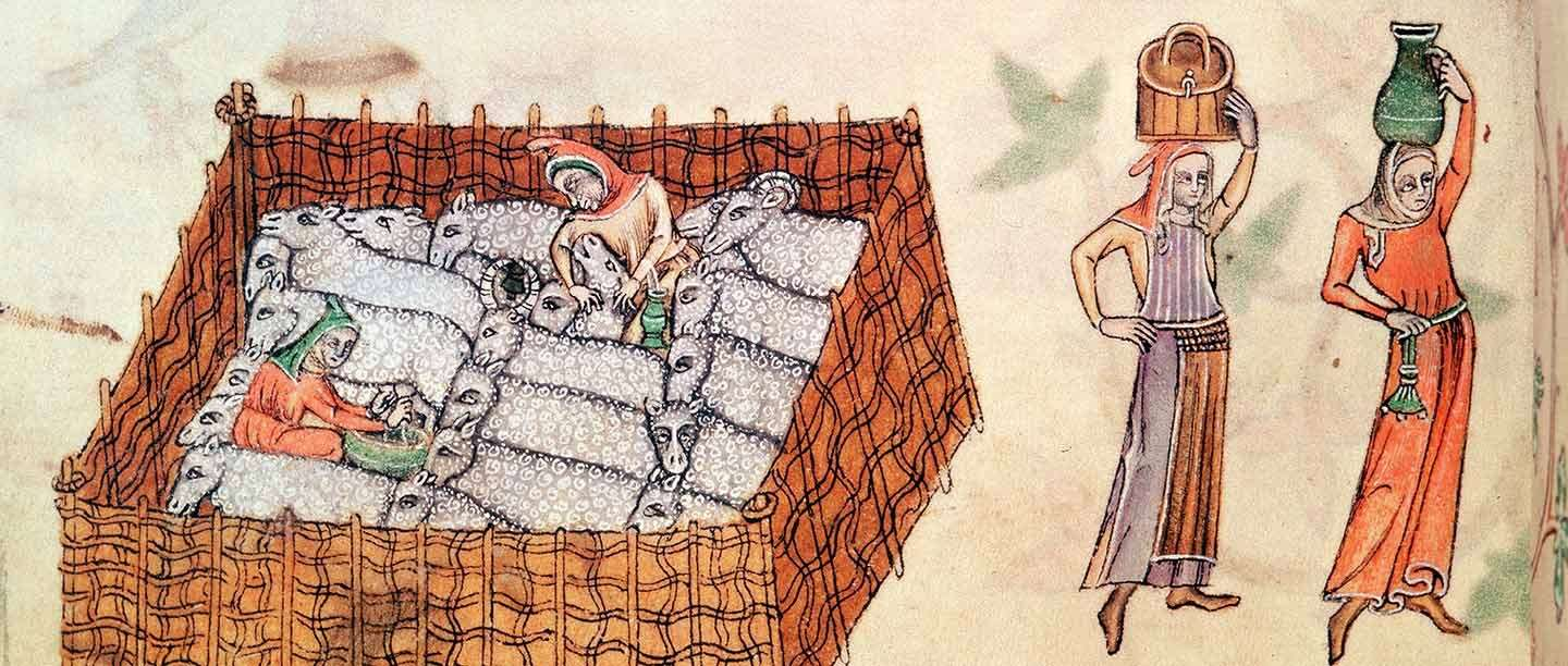 Sheep and shepherds in a pen, depicted in a 14th-century manuscript