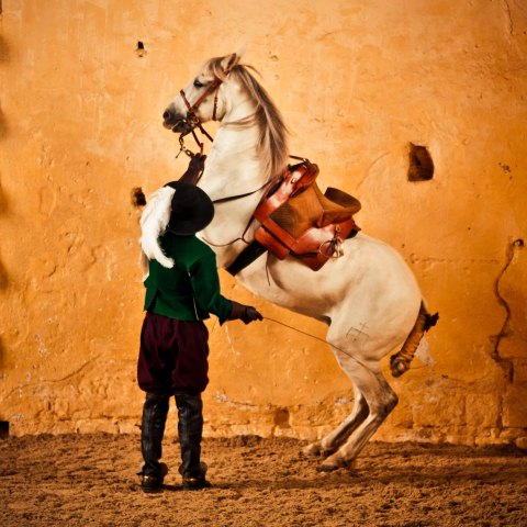 A spectacular horse display at Bolsover Castle's Cavendish's Horses